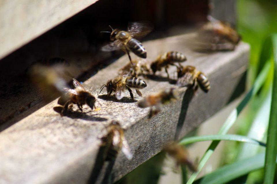 پروازهای مسیریابی زنبورعسل