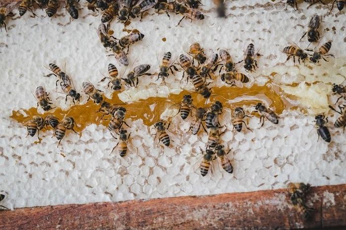 زنبورها باید عسل بخورند