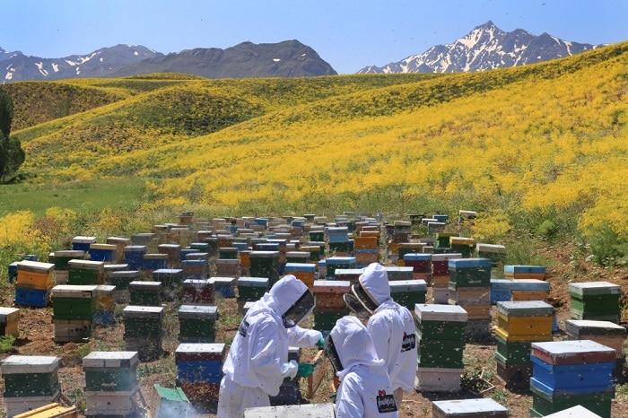 10 واقعیت درباره عسل ارگانیک وحشی