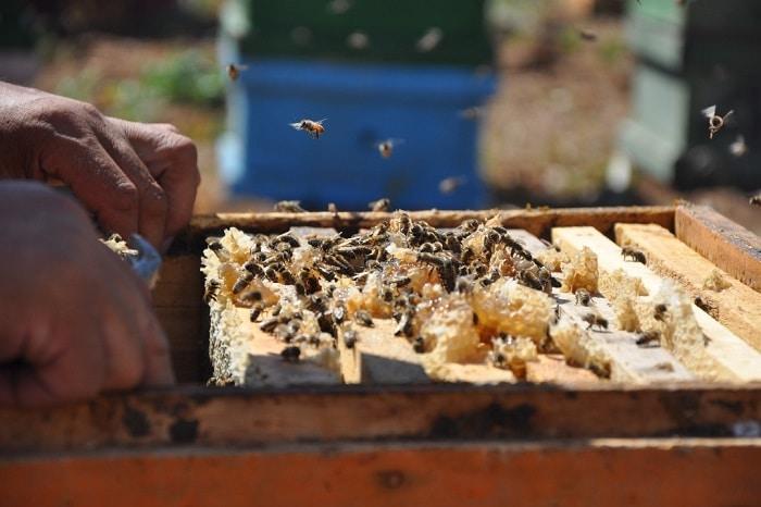 تاریخچه و ترکیبات عسل طبیعی