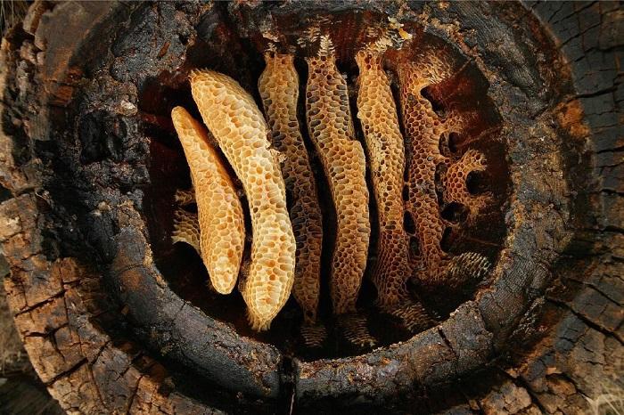 استفاده از عسل چه مقدار قدمت دارد؟